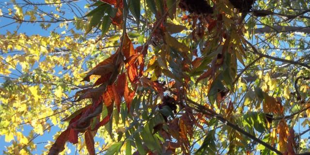 L'automne…partout.